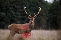 Leica Entfernungsmesser Jagd : Entfernungsmesser realtree jagdbekleidung uckermark jagd